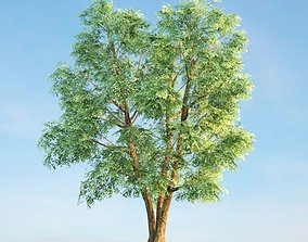 nature Green Leafed Tree 3D