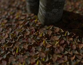 Dry Linden Leaves Pack 3D asset