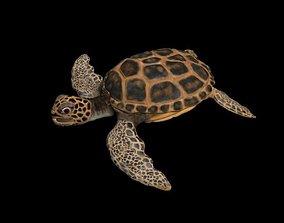 Ocean Turtle 3D model