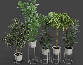 3D White wire base and pot Ficus Set