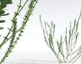 EVERYPlant Hollow-Stemmed Sphenophyllum 07 --16 Models--