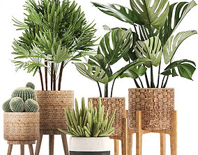 Collection of Exotic Plants 3D grass