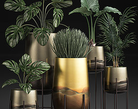 Decorative plants in Luxury Gold Pots for the interior 3D