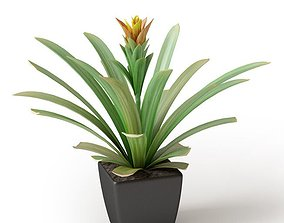 Exotic Green Potted Plant 3D