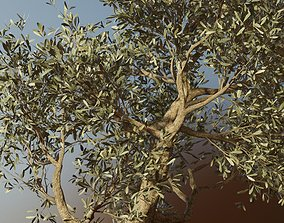 Set of 6 Olive Trees 3D model