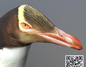 3D asset Yellow eyes penguin