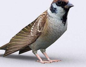 animated 3DRT - Sparrow