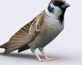 3DRT - Sparrow animated