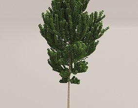 Birch Tree 3D model VR / AR ready