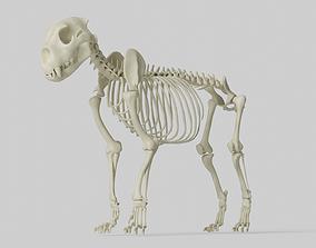 3D Lion Skeleton skull