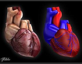 Human heart Vray 3D