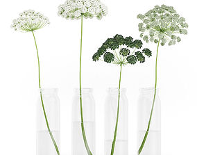 3D model Wild Carrot Flowers in Glass Jars
