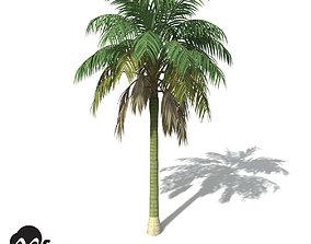 3D XfrogPlants Kentia Palm