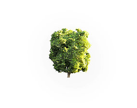 gameready 3D model game-ready Low Poly Tree Stylish