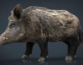 3D asset wild Wild Boar