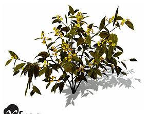 3D XfrogPlants Scarlet Plume