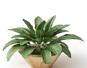 Leafed Potted Plant 3D model