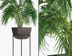 Realistic Plant Garden 3D model