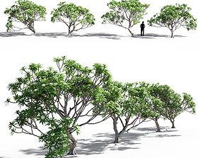 Plumeria collection 3D