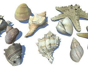 3D model Seashells and Starfishes Vol 3