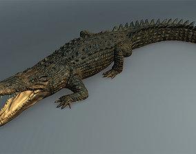 Salt Water Crocodile - Owen moloney 3D