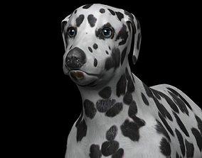 black and brown dalmatian 3D asset