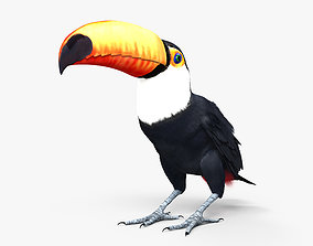 3D Toco Toucan HD