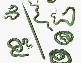 Green Snake - 3D Mesh ar game-ready
