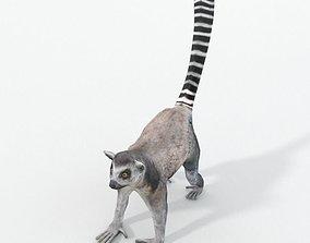 3D asset Lemur
