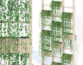 3D model Green wall ivy
