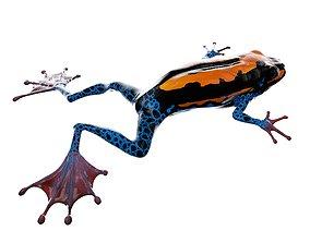 amphibian Frog 3D Model