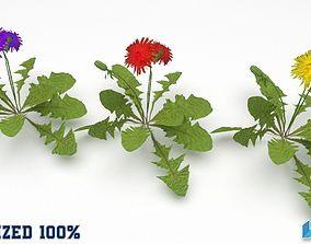 Dandelion Flower Plant Optimized 3D model