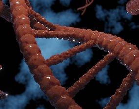 DNA Cell 3D model