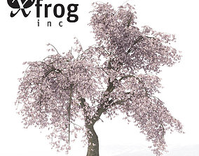 3D XfrogPlants Weeping Higan Cherry