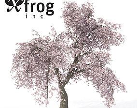 3D XfrogPlants Weeping Higan Cherry