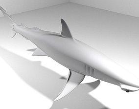 Shark - Bonnethead 3D