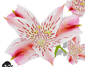 XfrogPlants Pink Tiger Lily 3D