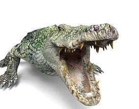 game-ready 3D crocodile alligator Model