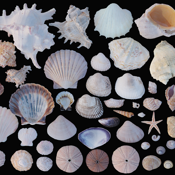 Ground And Sea Shell Collection