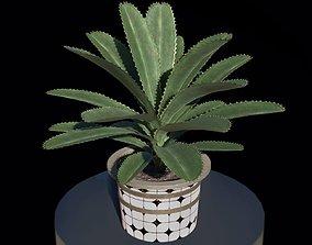 3D asset low-poly plant in pot