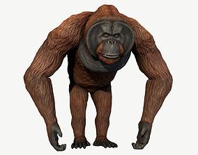 3D model Bornean Orangutan Male