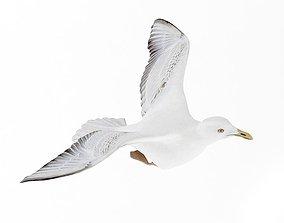 Seagull Bird 3D model