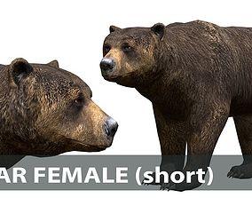 3D model BEAR FEMALE short pack