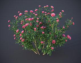 3D model XfrogPlants Japanese Camellia - Camellia