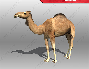 Camel Animated 3D asset