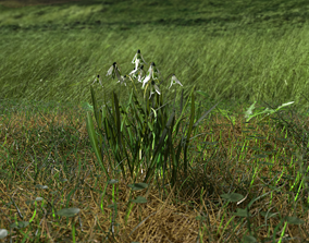 Common Snowdrop Pack 3D model