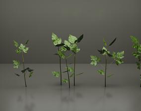 3D asset realtime Small Plants
