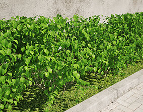 Hedge 03 3D model