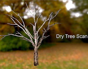 Dry Tree Scan 3D asset