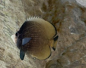 Dark butterfly fish 3D model